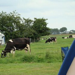 Ormsby Field - Castricum